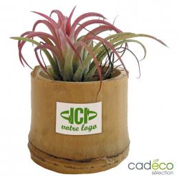 Plante dépolluante GLINDE
